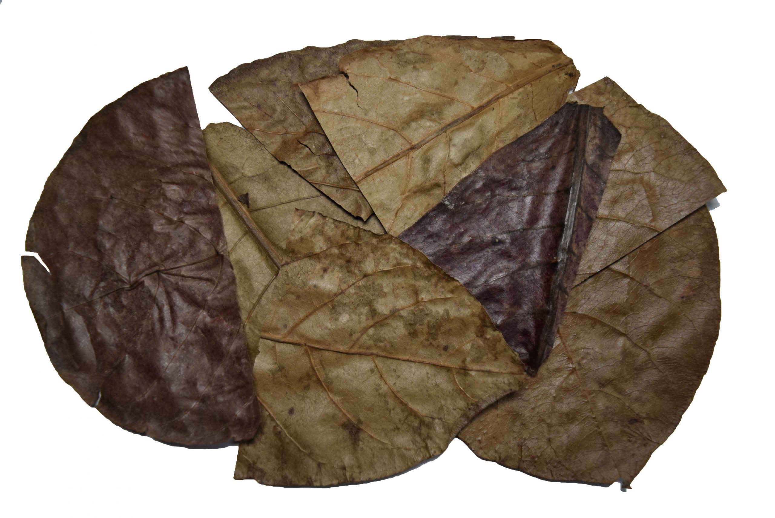 3-5 Indian Almond Leaves